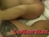banged, bear, fat